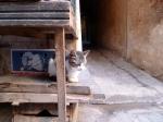 Gato na entrada